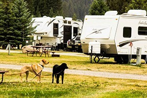 Yellowstone KOA Mountainside :: Just 8 minutes west of the Park, our quiet facility features 20 spacious tent sites w/clean restrooms along with 175 50-amp full hook-up RV sites and 4-6 person deluxe cabins.